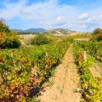 Israel é um Dos Primeiros do Mundo na Reciclagem de Água
