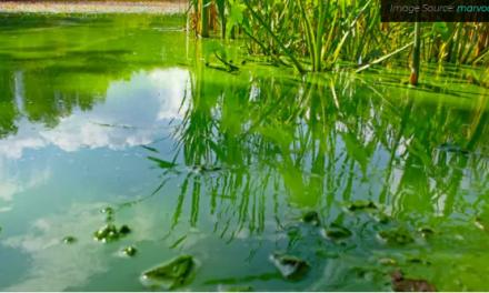Controle de odor e algas com aeração