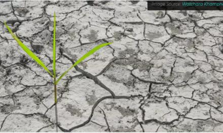 A escassez de água está colocando a produção global de alimentos em risco
