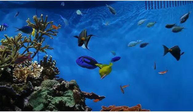 A temperatura do aquário